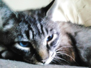 Max and his intoxicating eyes